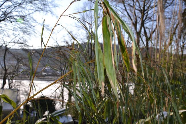 Gartentipps | Bambus Wissen Bambus Im Garten Tipps