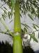 Bambus Impressionen