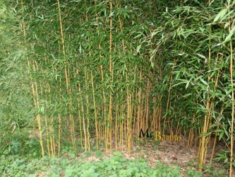 """Nun, man sieht es den Bambuspflanzen auf dem gerade fertig gestellten Messestand nicht an, dass sie """"nur"""" geliehen sind. Und so soll es ja auch sein! Viele Agenturen bieten ihre […]"""