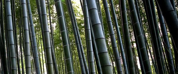 Wachstum von Bambus Den Weltrekord in puncto Wachstum pro Tag hält der Riesenbambus Moso ( Phyllostachys pubescens ) mit bis zu 160 cm pro Tag. Dabei werden Höhen von 35 […]