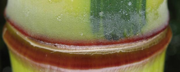 Alternative: nachwachsende Rohstoffe  Es muss nicht immer Plastik sein.